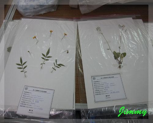 植物標本.jpg