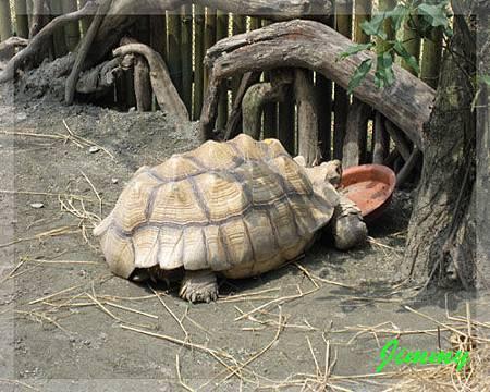 象龜.jpg