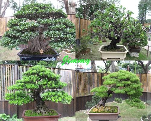 各式盆栽3.jpg