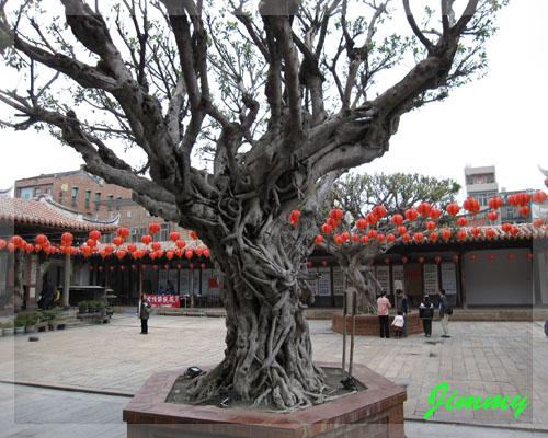老樹.jpg