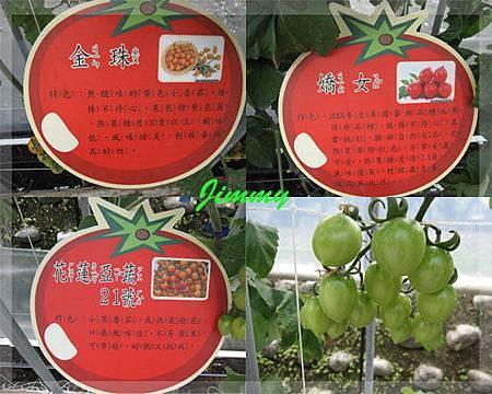 各式蕃茄2.jpg