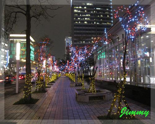 市府旁行道樹.jpg