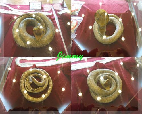 毒蛇標本.jpg