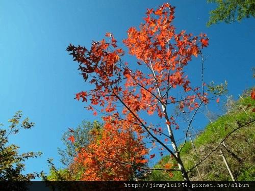 [尖石] 司馬庫斯巨木林健走 2011-12-04 108.jpg