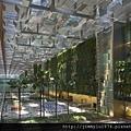 新加坡樟宜機場室內植生牆