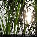[新竹千甲] 金鋐建設「金鋐微美」(大樓)基地周遭環境 2013-11-25 019.jpg