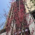 [竹北高鐵] 惠友建設-惠友紳(大樓)2016-03-04 001