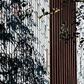 [新竹三民] 榀HOUSE(大樓)2016-03-13 015.jpg