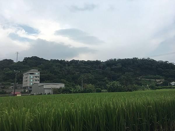 [田野踏查] 縣三重劃區2016.06 010.JPG