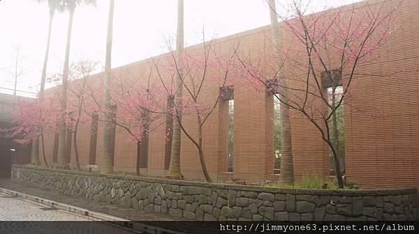 12停車場的櫻花.jpg