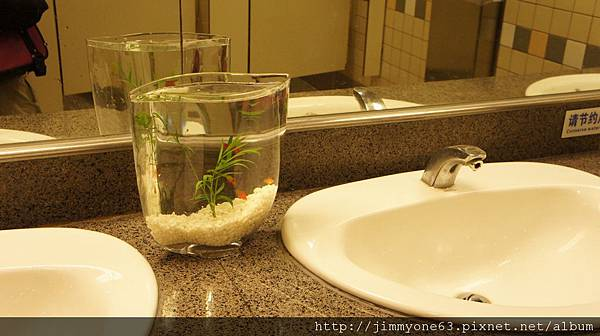 48機場洗手台的魚缸