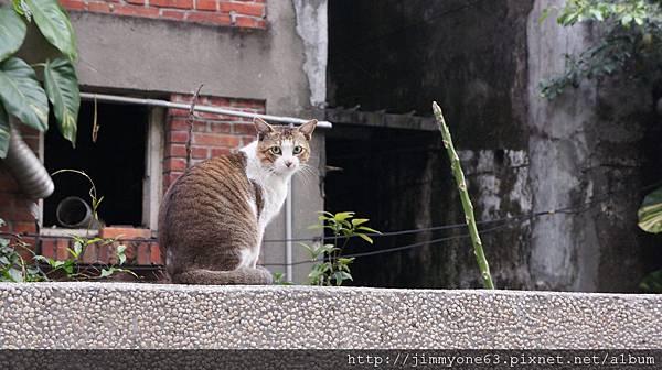 01圍牆上的貓