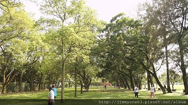 09樹蔭下的小草坪