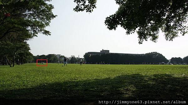 39大草坪的一角(畫重點)