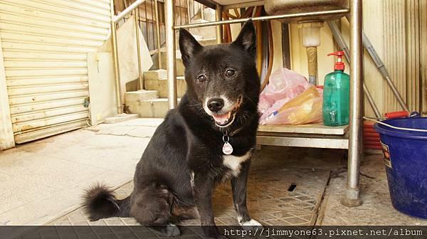 29友善不怕生的小黑狗