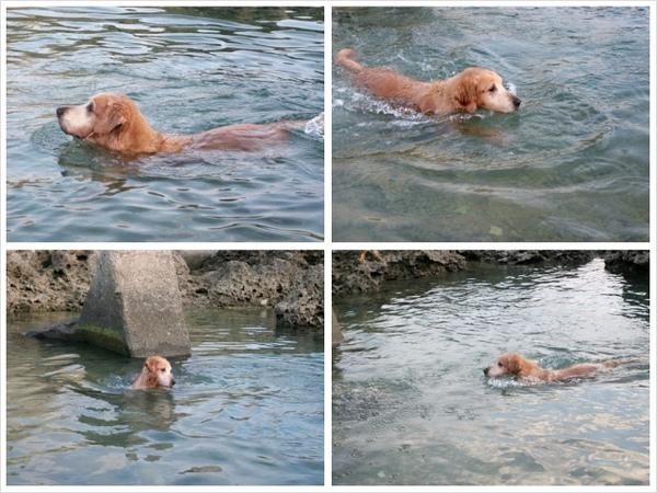 游泳-5.jpg
