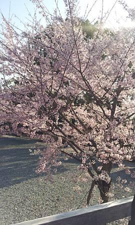 C360_2012-04-04-16-05-47