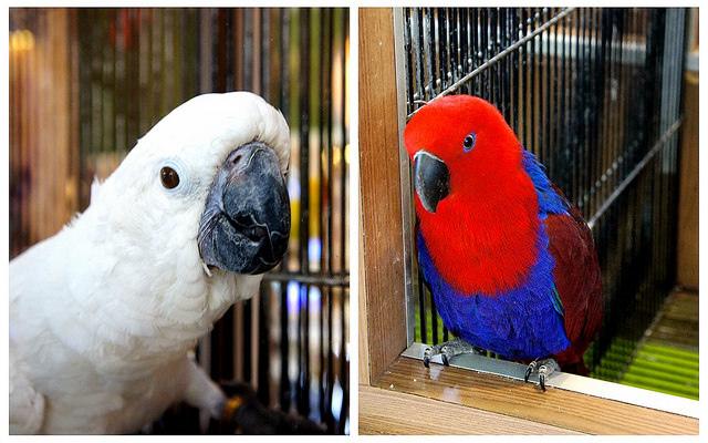 菁悅天空-紅鸚鵡與白鸚鵡