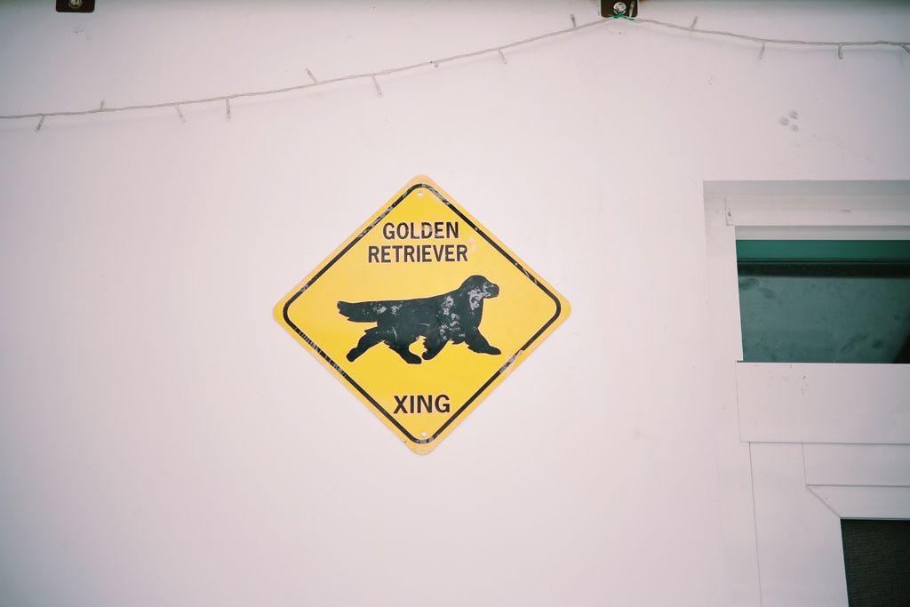 小屋門口一定要有黃金獵犬,因為這是龍靖家