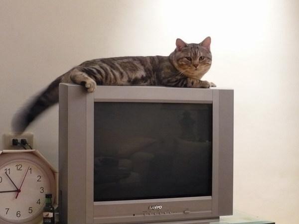 客廳電視上的BOBO