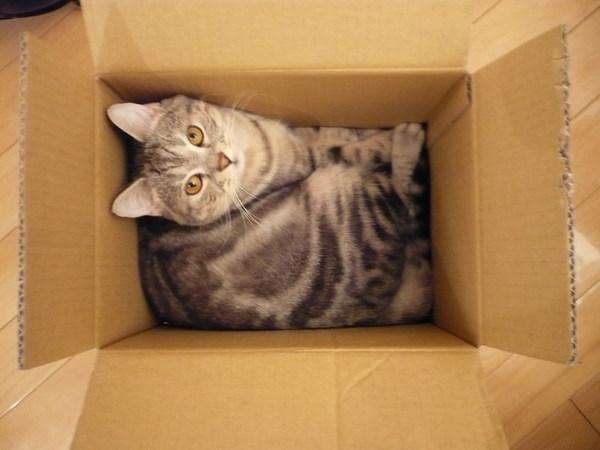 我喜歡紙箱跟紙袋