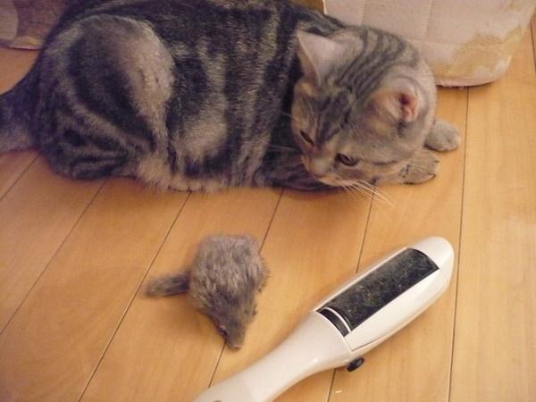 養貓必備工具