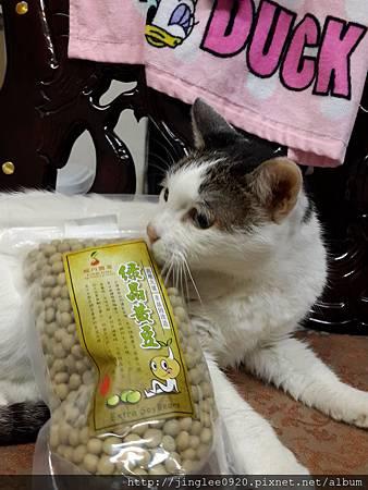 201503綠晶黃豆