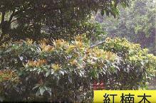 十三股古圳動植物調查4.jpg
