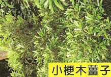 十三股古圳動植物調查2.jpg