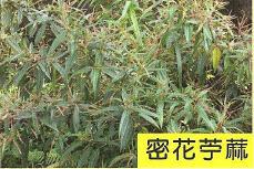 十三股古圳動植物調查6.jpg