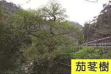 十三股古圳動植物調查