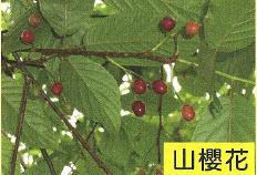 十三股古圳動植物調查8.jpg