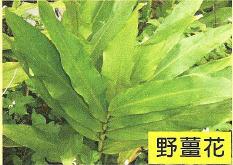 十三股古圳動植物調查10.jpg
