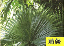 十三股古圳動植物調查11.jpg