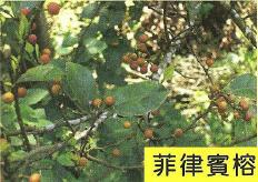 十三股古圳動植物調查9.jpg