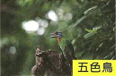 十三股古圳動植物調查17.jpg