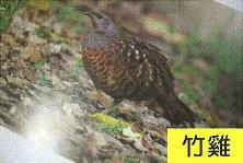 十三股古圳動植物調查16.jpg