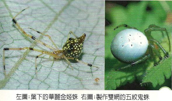 蜘蛛生態資源02