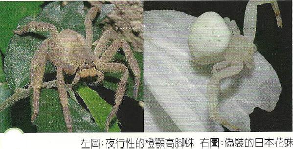 蜘蛛生態資源01