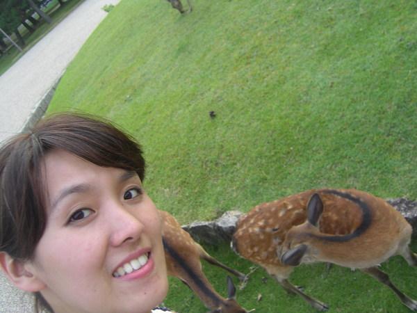 奈良公園好多鹿喔
