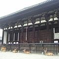 小鹿圍繞的興福寺