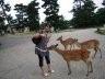 我和咬我的小鹿