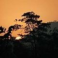 旗山10 (夕陽)