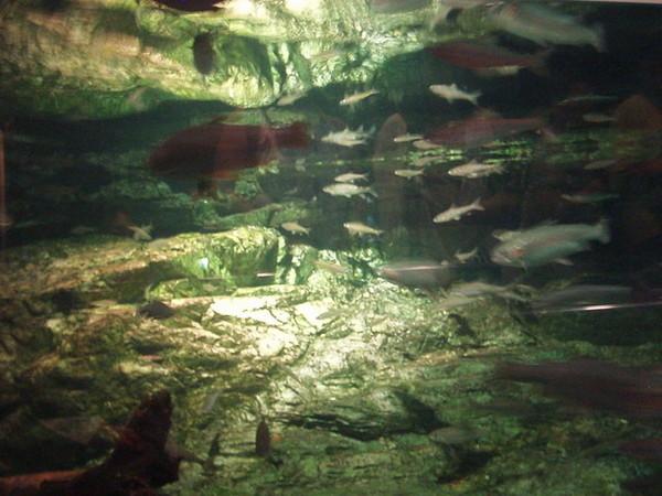 海生館的魚...