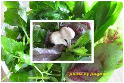 食草-野菜.jpg