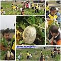 2009-02-06採蘿蔔趣1.jpg