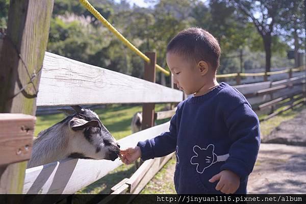 滔滔餵羊.jpg