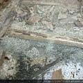 拆木地板-11112805-白蟻窩