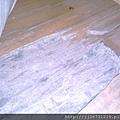 *2011丈量*多年實木地板嚴重變型+百蟻大軍再次來襲IMAG2808.jpg