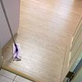 真木紋 水洗白橡-111208461-黃光下 超耐磨木地板/強化木地板